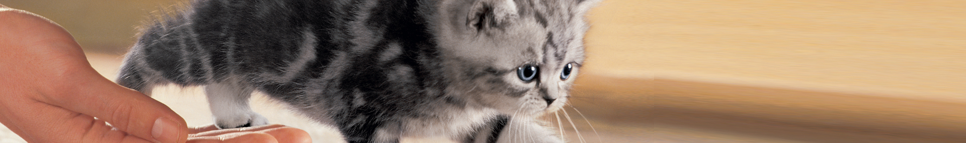 Whiskas® Kitten adopter-un-chaton