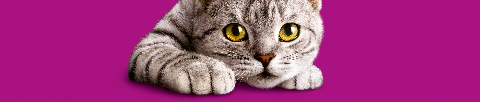 Whiskas® Chats 7 ans et +