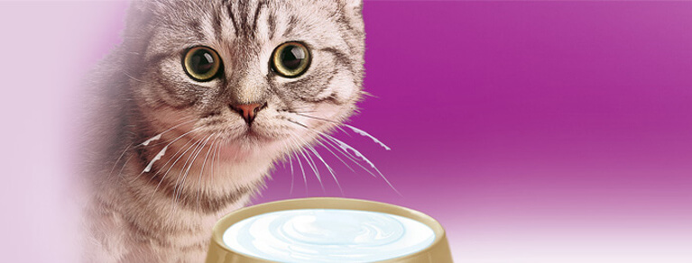 Whiskas® Kitten A chaque chat son alimentation