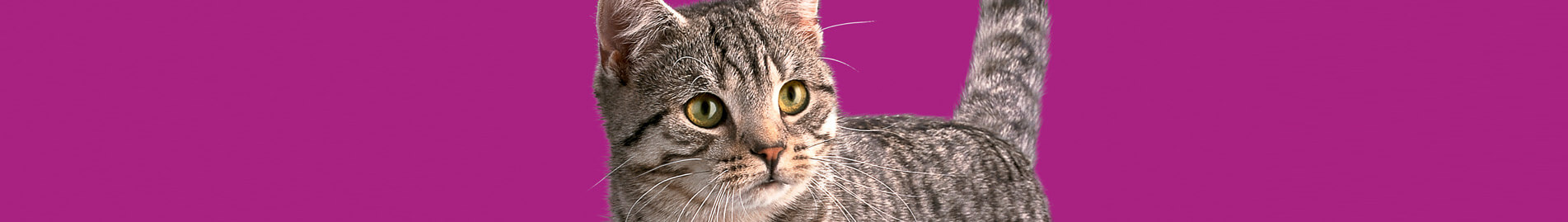 Whiskas® Kitten Le comportement naturel du chat